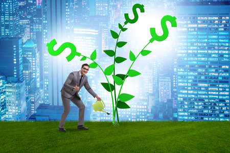 Money tree concept with businessman watering