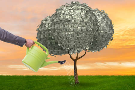 Businessman watering money tree in investment concept Imagens