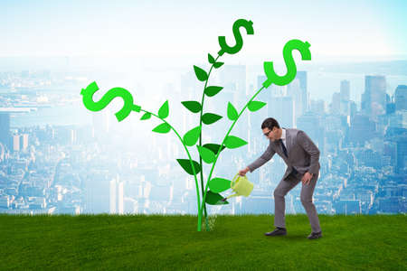 Money tree concept with businessman watering Imagens