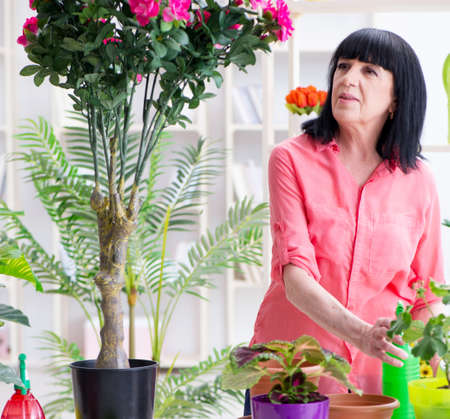 Woman florist working in the flower shop Stock Photo