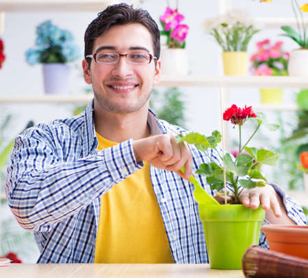 Gardener florist working in a flower shop with house plants Stockfoto