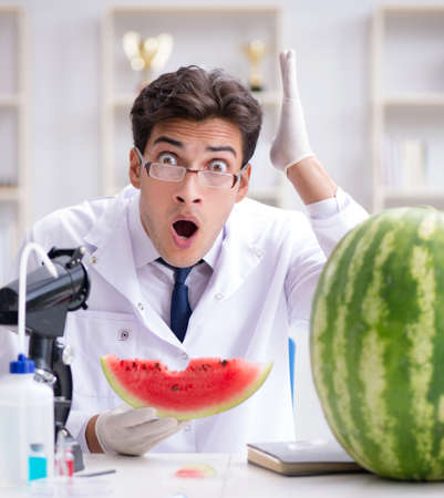 Scientist testing watermelon in lab 写真素材