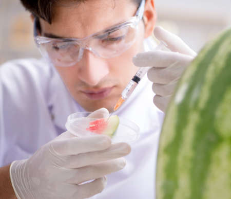 Scientist testing watermelon in lab 写真素材 - 129991170