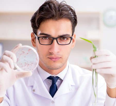 Biotechnology scientist chemist working in lab Stok Fotoğraf