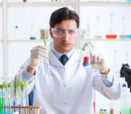 Mannelijke biochemicus die in het laboratorium aan planten werkt