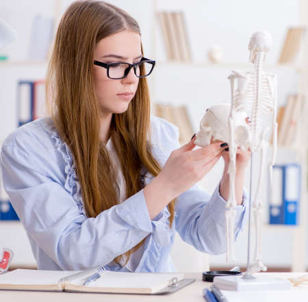 Student sitting in classroom and studying skeleton Standard-Bild