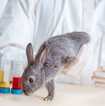Scientist doing testing on animals rabbit 写真素材