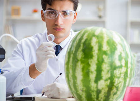Scientist testing watermelon in lab Stok Fotoğraf