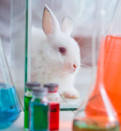 White rabbit in scientific lab experiment Archivio Fotografico - 135268030