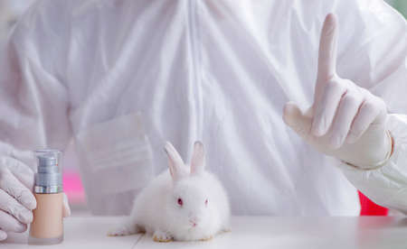 The scientist doing animal experiment in lab with rabbit Banque d'images