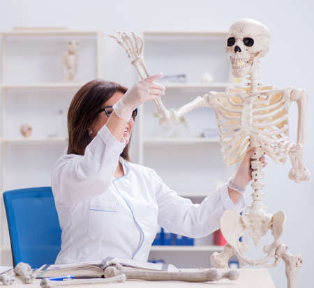 Doctor working in the lab on skeleton