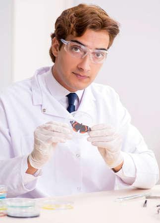 Scientist entomologist studying new butterfly species Standard-Bild
