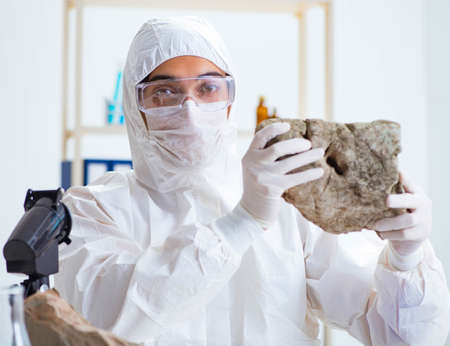 The scientist looking and stone samples in lab Foto de archivo