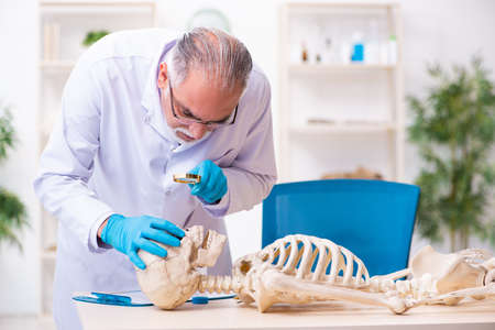 Old senior anthropologist working in the lab Stock Photo
