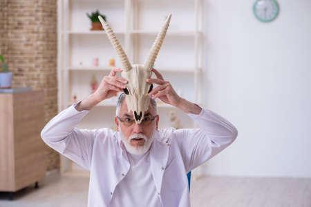 Old male paleontologist examining goat head at lab Reklamní fotografie
