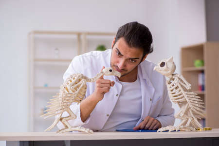 Young male zoologist demonstrating skeletons of eagle and owl 版權商用圖片