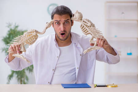 Young male zoologist demonstrating skeletons of eagle and owl
