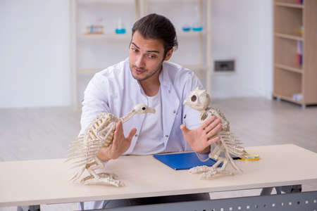 Young male zoologist demonstrating skeletons of eagle and owl Reklamní fotografie