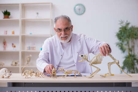 Old male paleontologist examining ancient animals at lab