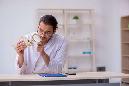 Young male zoologist student studying fish skeleton