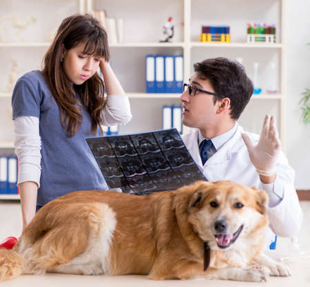 Doctor and assistant checking up golden retriever dog in vet cli Фото со стока