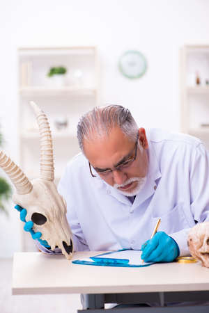 Old senior paleontologist working in the lab