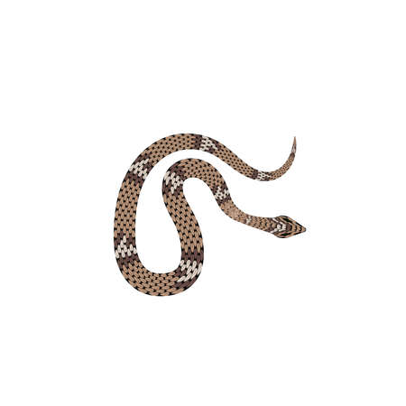 Brown python vector illustration. Isolated tropical snake on white background. eps10 Foto de archivo - 126065503