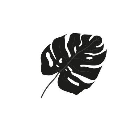 Leaf of tropical plant vector illustration. Monstera leaf