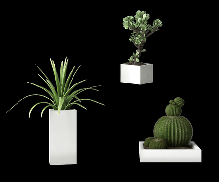 black backgound: Succulent plants isolated on black backgound Stock Photo