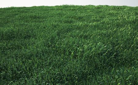 부드러운 잔디 필드, 전망보기 스톡 콘텐츠