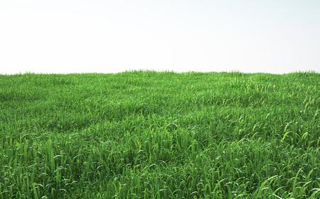 부드러운 잔디 필드, 전망보기 스톡 콘텐츠 - 68968221