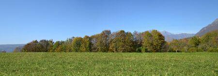 푸른 잔디와 푸른 하늘 백그라운드에서 나무와 초원 여름