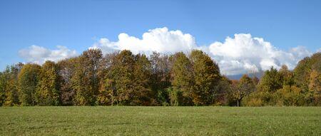 푸른 잔디와 푸른 하늘 백그라운드에서 나무와 초원 스톡 콘텐츠 - 68968224