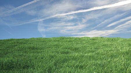 잔디와 푸른 하늘 백그라운드에서 초원 스톡 콘텐츠