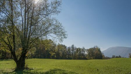 트리 및 백그라운드에서 푸른 하늘이 푸른 잔디와 초원 스톡 콘텐츠