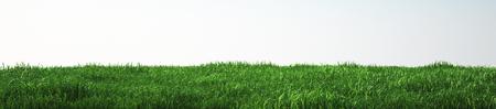 Gebied van zacht gras, perspectief bekijken Stockfoto