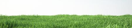pasto sintetico: Campo de hierba suave, vista en perspectiva Foto de archivo