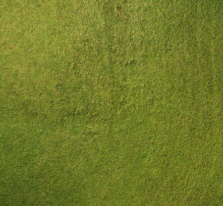 녹색 잔디 배경 질감 스톡 콘텐츠 - 70776910