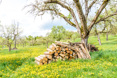 timber stack in orchard in springtime flowering trees