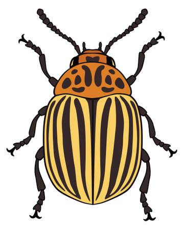 vermin: Vector illustration of colorado potato beetle isolated on white background Illustration