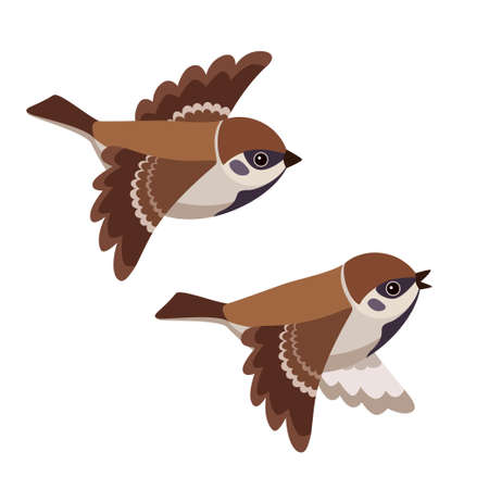 Vector illustration of flying cartoon Tree Sparrows isolated on white background