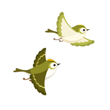 Vector illustration of cartoon flying Goldcrest pair (the smallest European bird) isolated on white background