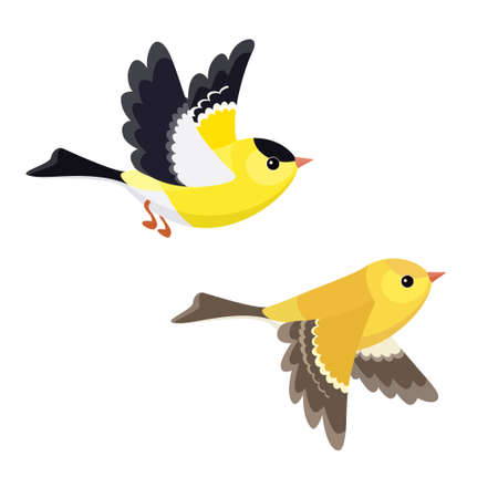 Vector illustration of cartoon flying American Goldfinch pair isolated on white background Stock Illustratie