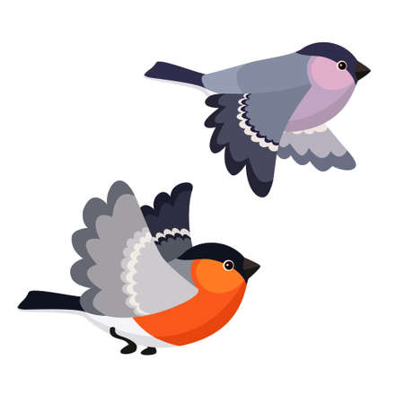 Vector illustration of cartoon flying bullfinches isolated on white background Stock Illustratie