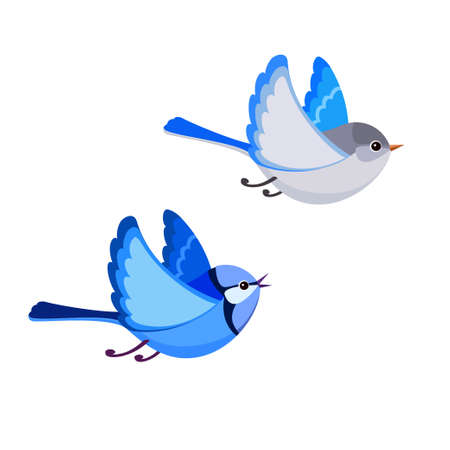 Vector illustration of cartoon flying Splendid Fairy Wren pair isolated on white background