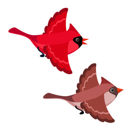 Vector illustration of cartoon flying cardinals isolated on white background