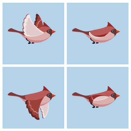 Vector illustration of cartoon flying Cardinal Bird (female) sprite sheet. Can be used for GIF animation