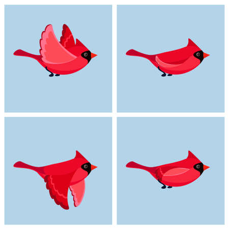 Vector illustration of cartoon flying Cardinal Bird (male) sprite sheet. Can be used for GIF animation Stock Illustratie