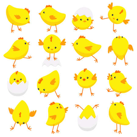 Ilustración de vector de pollitos orientales en varias poses aisladas sobre fondo blanco