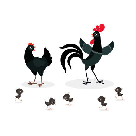 Vector illustration of black chicken family isolated on white background Illustration